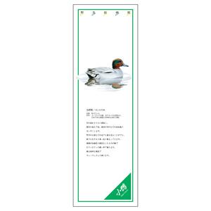シールギャラリー 916−44 コガモ