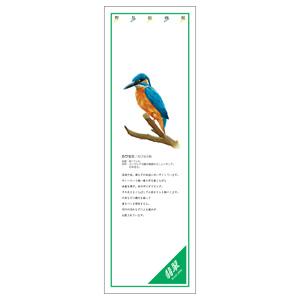 シールギャラリー 916−41 カワセミ